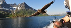 Havørnesafari med Hurtigruten - ruby Rejser