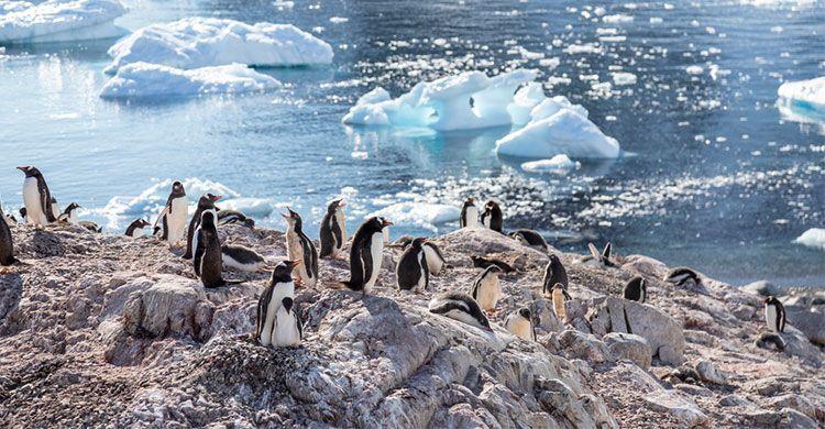 Pingviner der hygger og bader